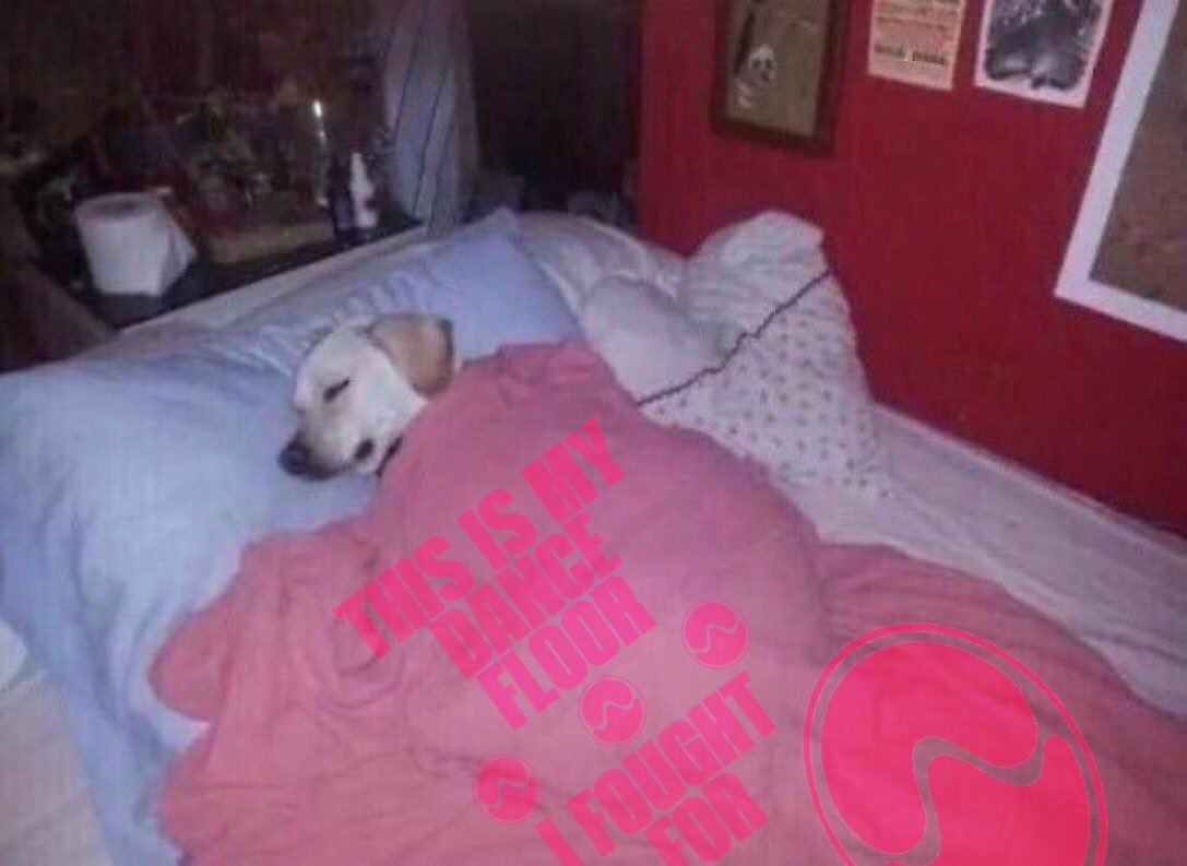 Dog in Free Woman blanket
